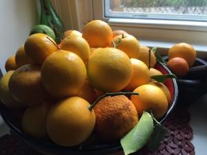 meyer lemons, ponderosa lemons, unnamed lemons, oh my!